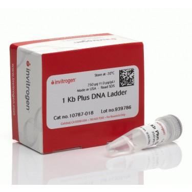1 KB PLUS DNA LADDER, FR C/ 250UG - Ref. 10787018 / INVITROGEN