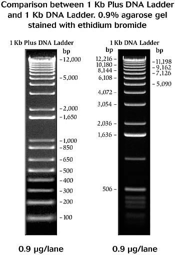 1 Kb Plus Dna Ladder Fr C 250ug Ref 10787018