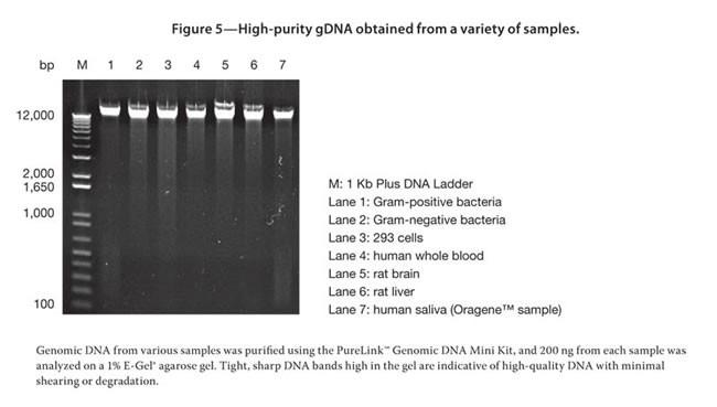 purelink genomic dna mini kit  kit c   50rxn